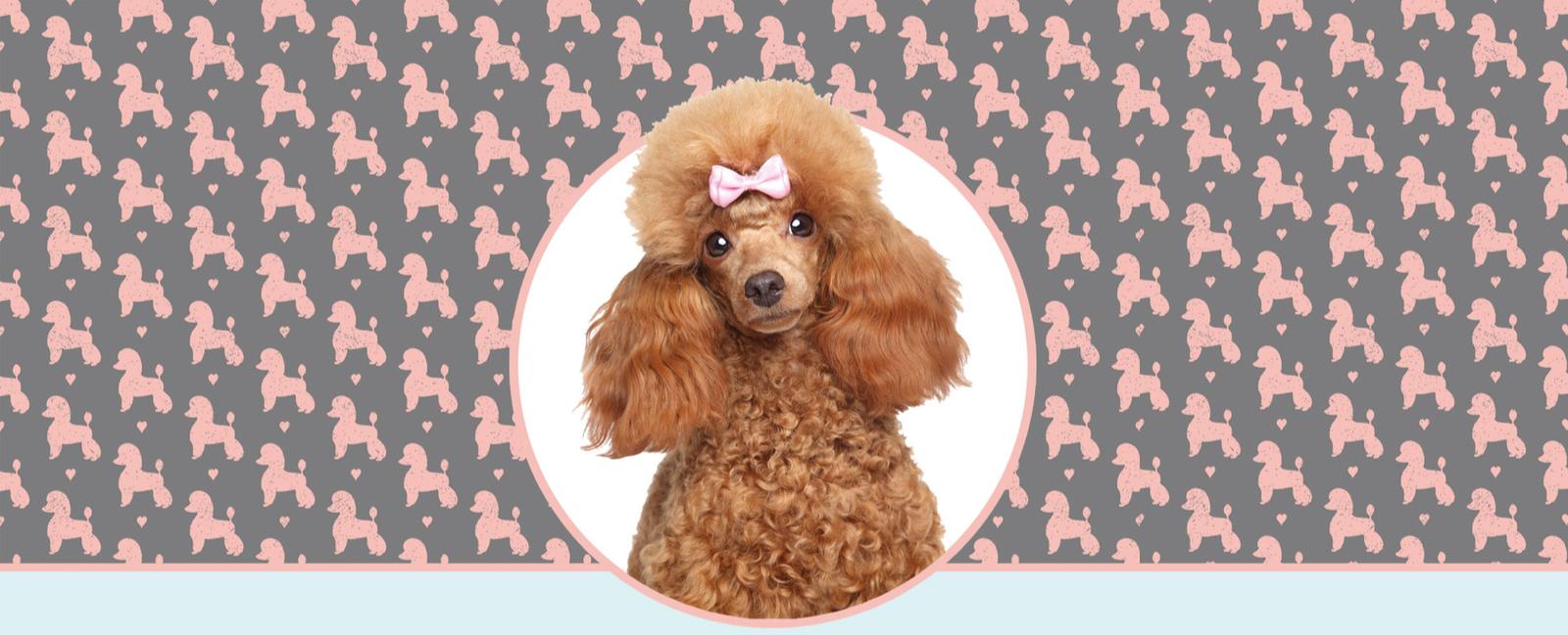 Hundesalon Wismar